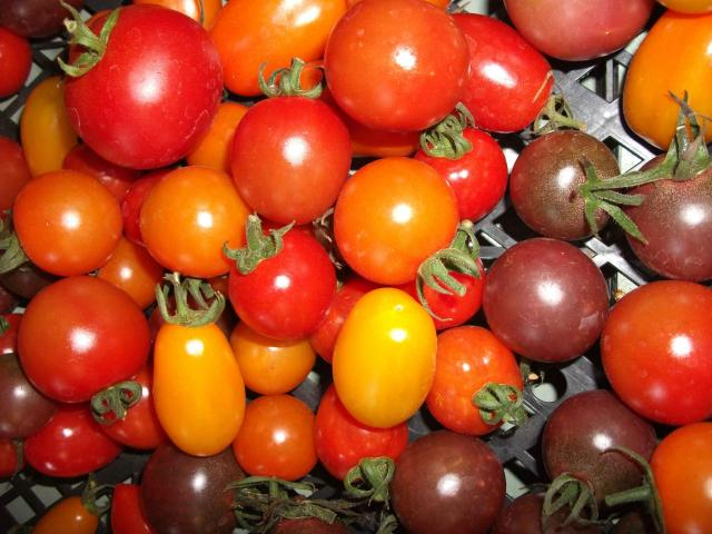 Cherry_toms_mixed.jpg
